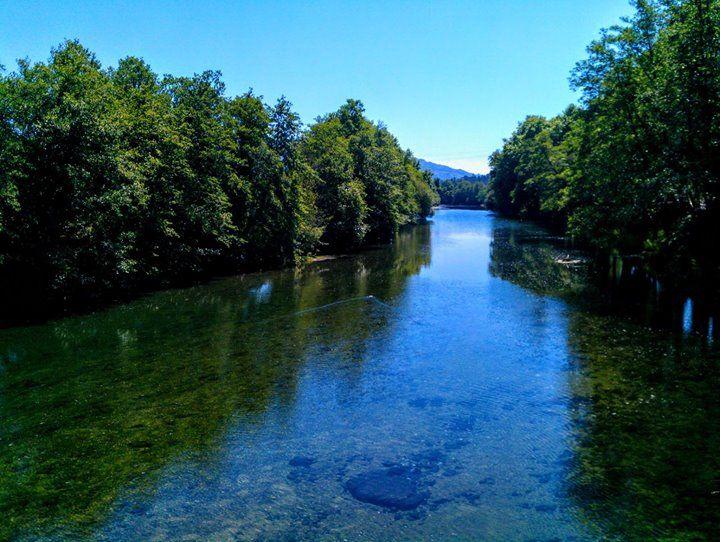 Boa noite :D  Pato no   rio Vez   translúcido em  Arcos de   pelas 14:00 horas da tarde primaveril e quase a cheirar a Verão de hoje