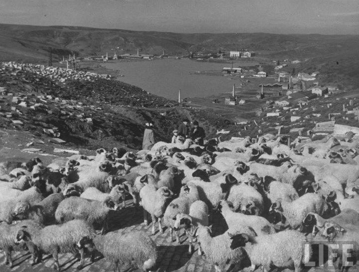 Bir İstanbul hayali Twitter'da: Halıcıoğlu / Bademlik (~1940) Musevi Mezarlığı'ndan Haliç'e bakış.