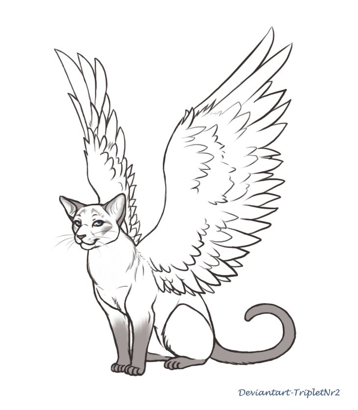 This is an image of Epic Cat With Wings Coloring Pages