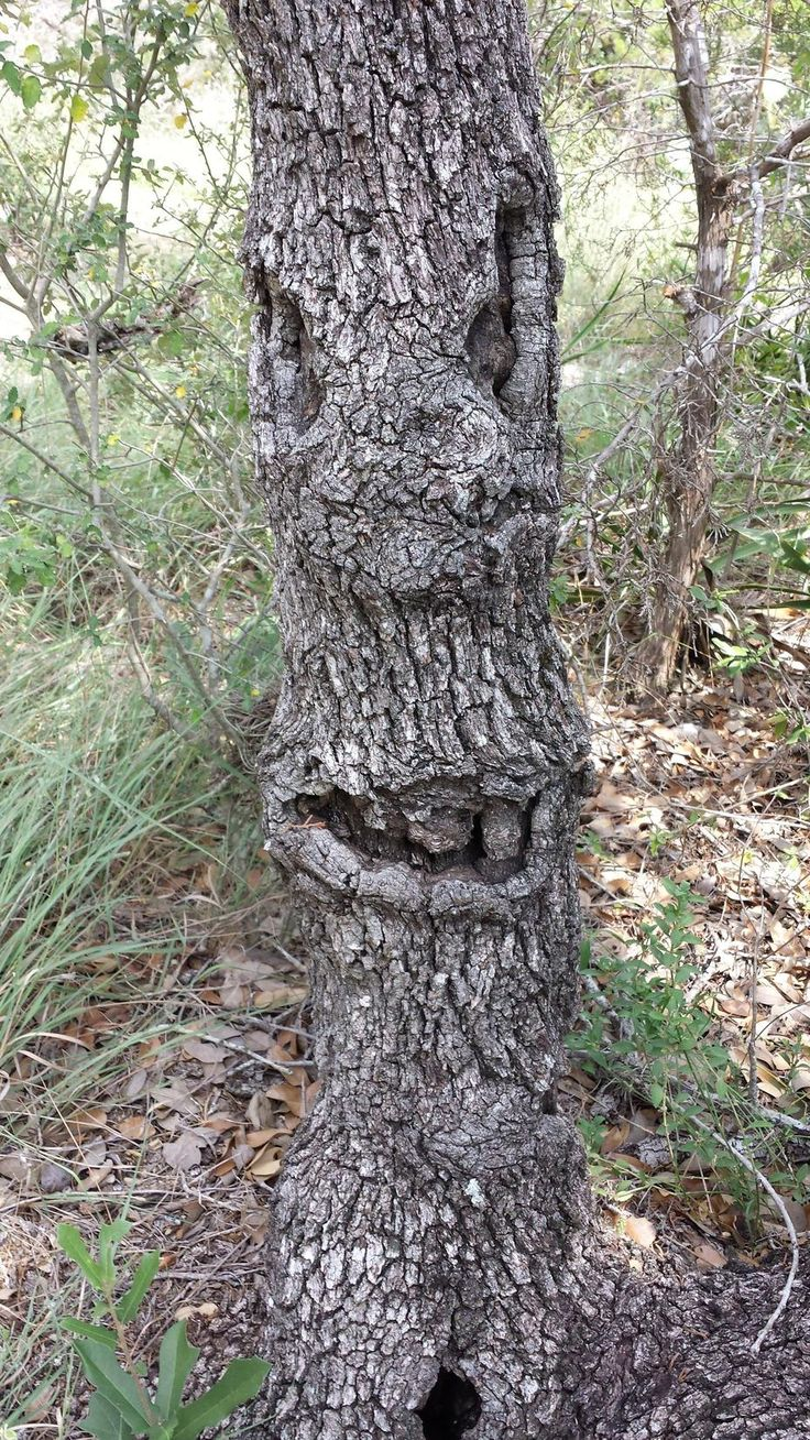 Smiling Tree Face