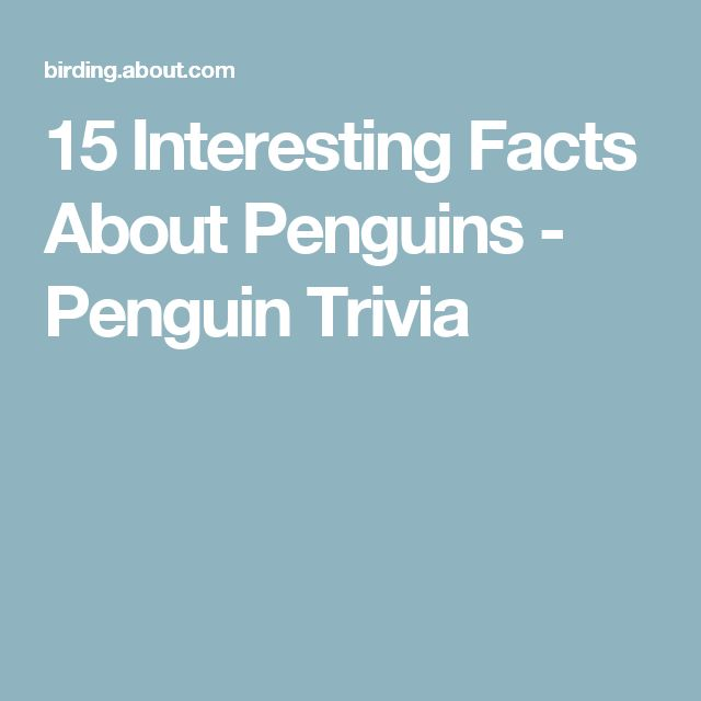 15 Interesting Facts About Penguins - Penguin Trivia