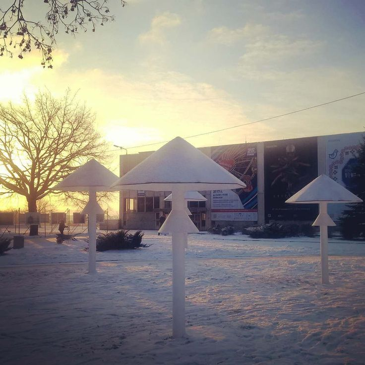 Śnieżne dzień dobry  #encek #nck #winter #zima #muchomory #zimowekołderki #nowahuta #dziendobry #goodmorning #hello #sun #nh
