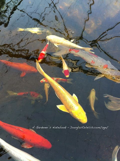 17 best images about koi on pinterest fish paintings for Artificial koi fish
