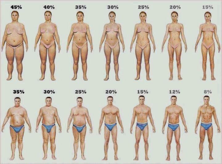 Φυσιολογικό ποσοστό λίπους στο σώμα ανά φύλλο και ηλικία | Total Fitness