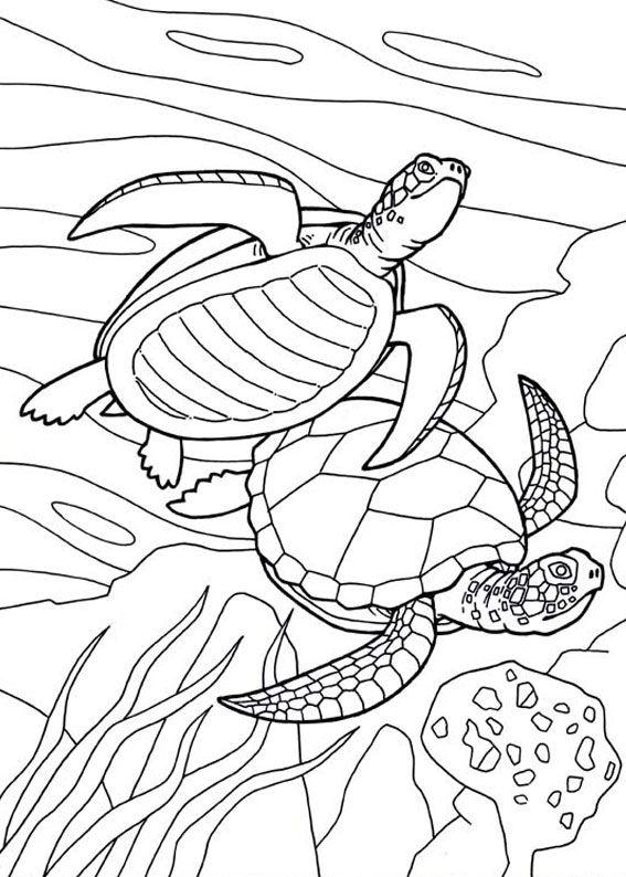 30 Disegni Di Tartarughe Da Colorare Turtle Coloring Pages Animal Coloring Pages Ocean Coloring Pages