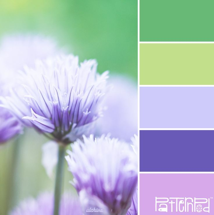 18 best colors palettes for everything images on pinterest color color palettes inspired by nature fandeluxe Gallery