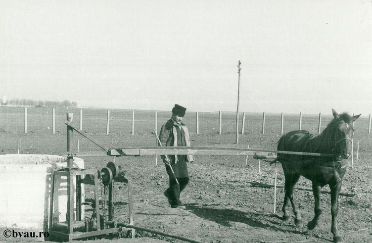 """Irigaţii, anul 1960, Galati, Romania. Imagine din colecțiile Bibliotecii Județene """"V.A. Urechia"""" Galați."""