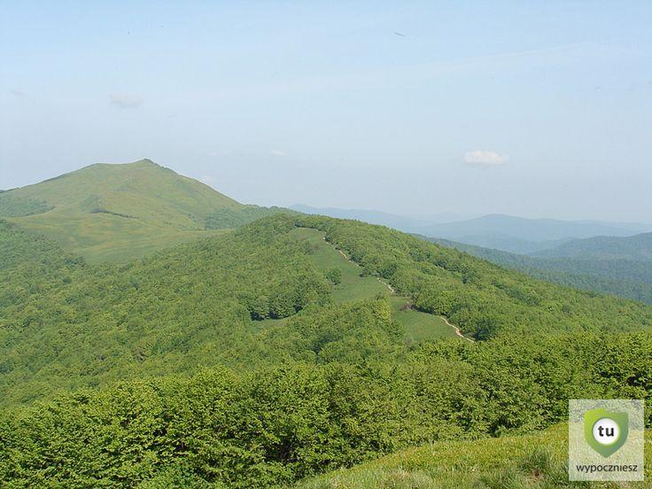 Połonina Wetlińska widok w kierunku góry Smerek