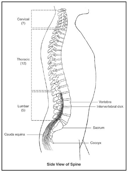 Are You Experiencing Back Pain The National Institute Of Arthritis