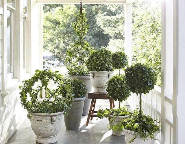 Beautiful topiaries house plants pinterest blue and white blue and and topiaries - Beautiful house plants ...