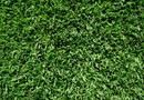 How to Make Zoysia Grass Look Incredible | Home Guides | SF Gate