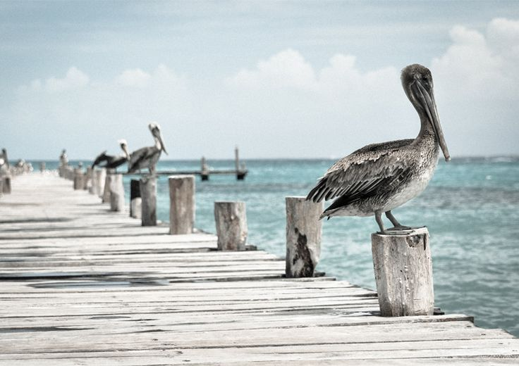 Pelican Jetty from Artifax
