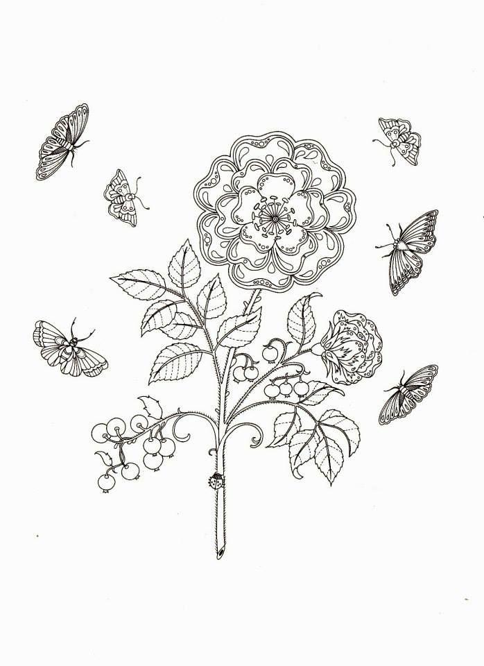 Image Result For Johanna Basford Coloring Pages Adult ColoringColoring PagesColouringSecret GardensJoanna