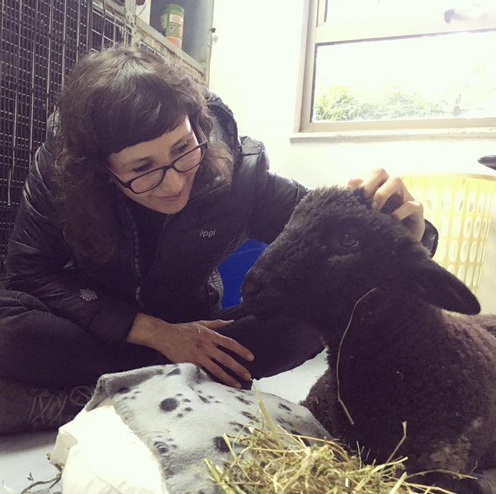 Ya estamos en la clínica con Pepe y nos acaban de confirmar que le darán el alta para que se vaya con nosotros al santuario! :')