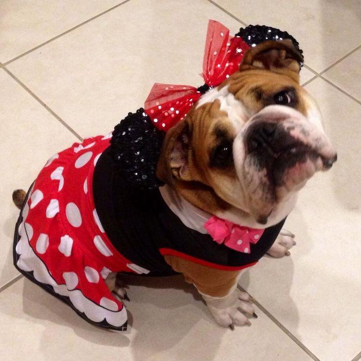 27 best Disney Pets images on Pinterest | Animals, Disney magic ...