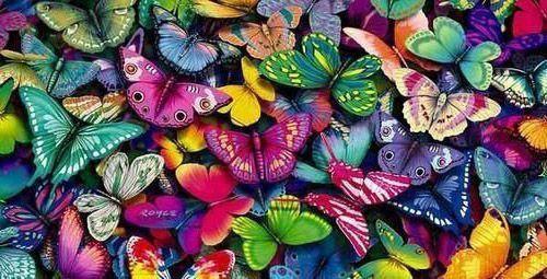 бабочки всех цветов