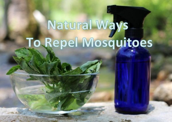best natural mosquito repellents essay Background of the study of the effectiveness of cymbropogon citratus as natural perfume insect repellent causes insects or other arthropods to make directed, oriented movements away from the source of repellent.