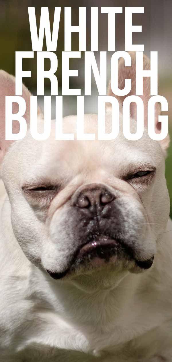 White French Bulldog French Bulldog Natural Dog Treats Dog Bakery