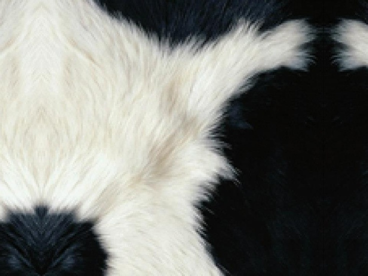 Cow - Samsung Galaxy Ace S5830