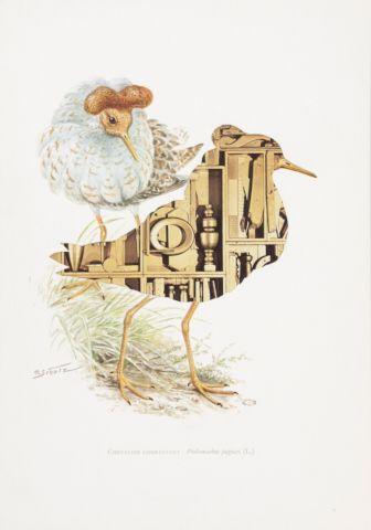 Kolář Jiří (1914–2002) | Jespák bojovný, z cyklu Ornitologie moderního umění | Aukce obrazů, starožitností | Aukční dům Sýpka