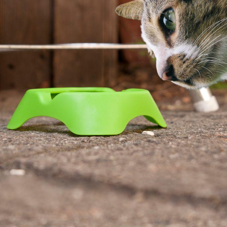 bloody urine in cat