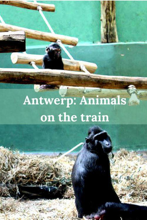 Antwerp: animals on the train - travellousworld.com
