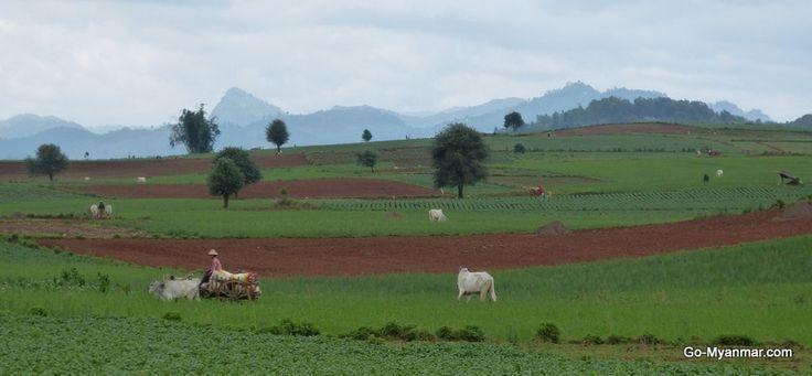 Shan hills between Pindaya and Kalaw