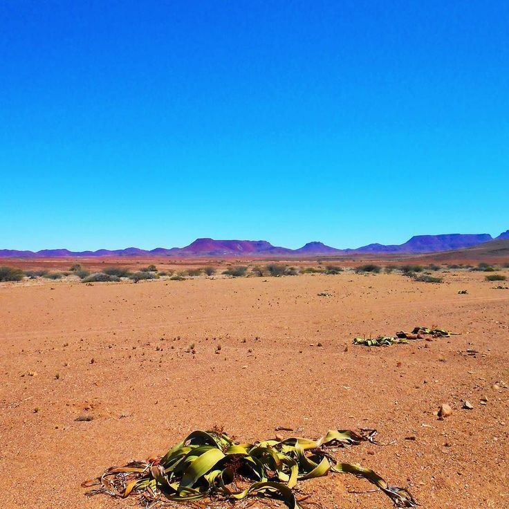 Goodmorning! It's weekend! Photo taken on a roadtrip in Namibia! #goodmorning #goedemorgen #itsweekend #weekend #nowork #roadtrip #namibia #namibie #africa #afrika #afrique #bluesky #colours #desertphotography #desert #dry #naturephotography #nature #africaphotography #travelphotography #travelphoto #reisfotografie #woestijn #globetrotter #iloveafrica #thisisafrica #haveaniceday #haveaniceweekend #fijnedag by lindaopreisnl @enthuseafrika