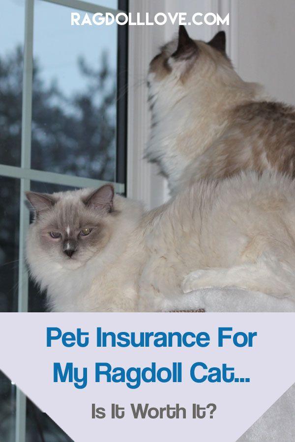 Pet Insurance For My Ragdoll Cat Is It Worth Having Dog Insurance Pet Insurance Cost Pet Insurance