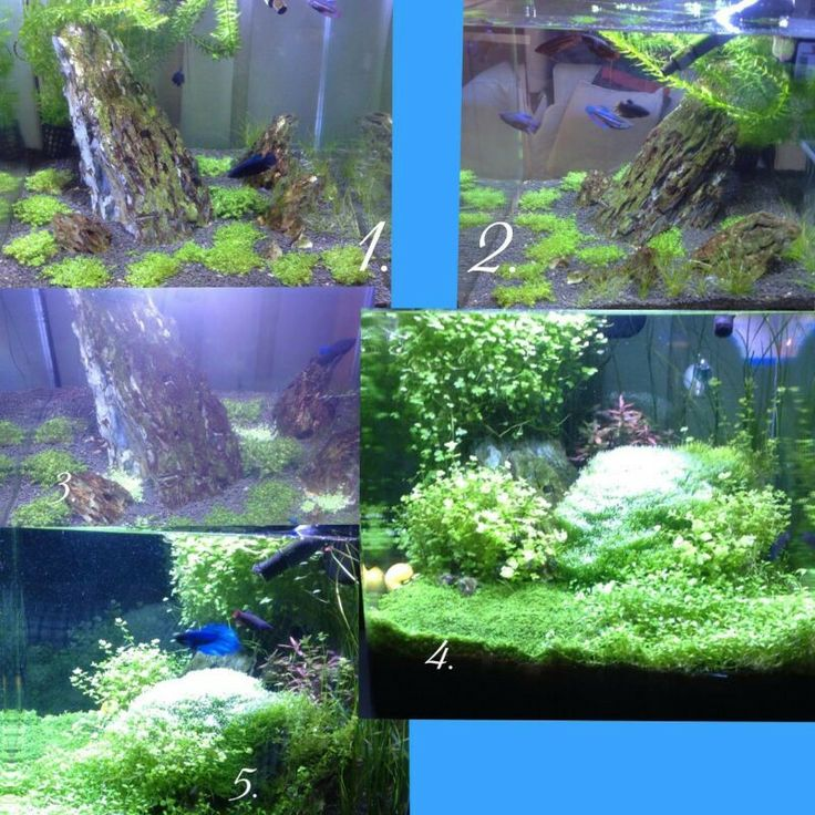 Developments of a Planted Aquarium by using SICCE Italy products