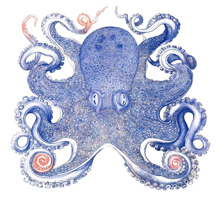 Artists Spends One Year Using Only Discarded Ballpoint Pens To Draw Giant Octopus .... and it was totally worth it. Recycling level: Van Gogh.