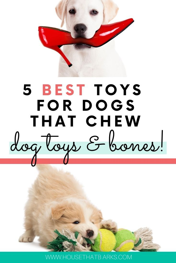 5 Best Dog Toys For Dogs That Chew Chew Toys Dog Toys Dogs