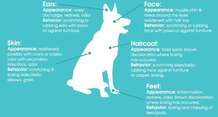 Seasonal Pet Allergies