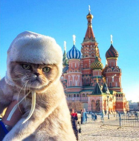 cat on vacation in Russia