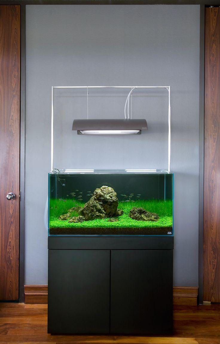 Aquarium Design Group - An Aqua Design Amano 90cm System #aquarium