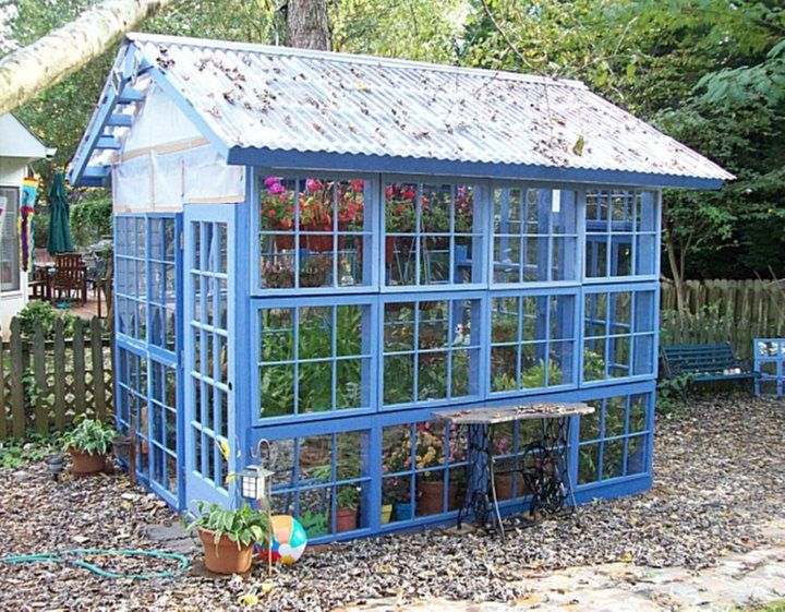 Greenhouses from Old Windows and DoorsWindows Greenhouses,  Glasshouse, Blue Green, Old Windows, Blue House, Gardens, Recycle Windows, Green House, Glasses House