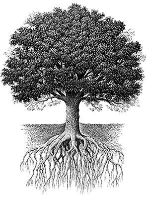 Scratchboard Art Tree Oak tree with roots