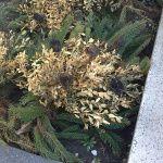 Halottak napja elött a temetőről - Művirág Selyemvirág Blog