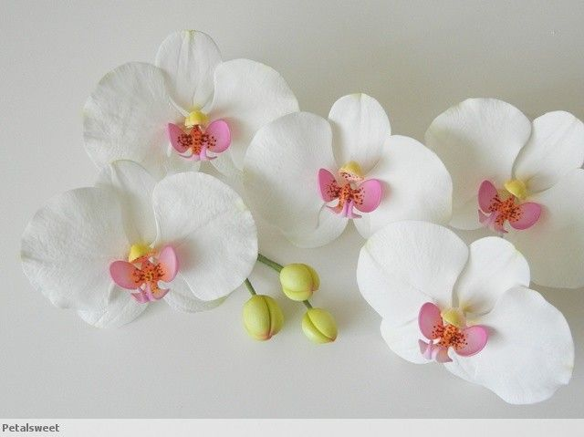 Phalaenopsis orchids in sugar...by Petalsweet.