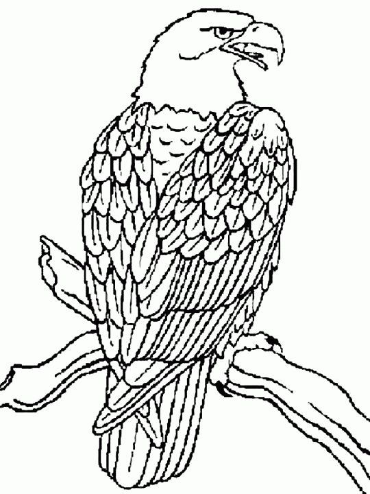 Eagle Coloring Page Alric Coloring Pages Coloring Coloring Pages