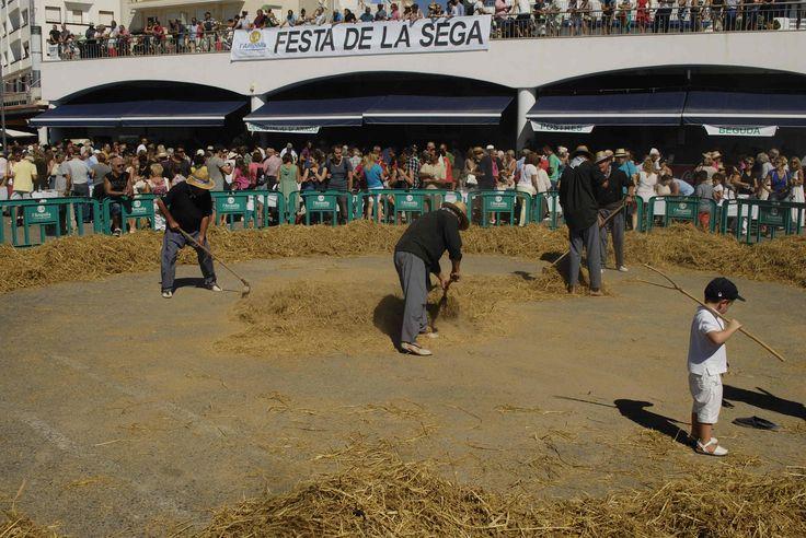 Després de batre'l amb els cavalls i retirar el pallús, l'arròs s'amuntega al centre. Ja està preparat per passar per l'erer.