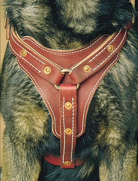 Leather Dog Harnesses - Latigo Leather Padded Tracking Harness