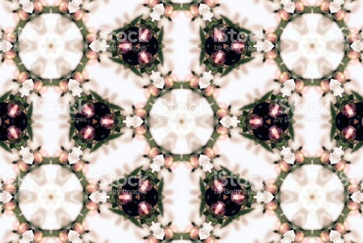 Manuka Flower Mandala royalty-free stock photo