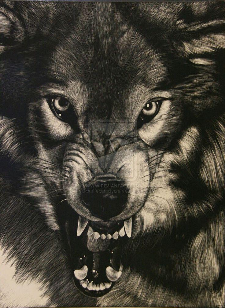 фото рисунок оскал волка красивые берега, поросшие