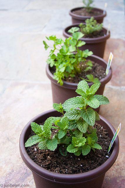 Spring means growing herbs at home.    blog.junbelen.com/2010/04/05/starting-an-herb-garden-how-...