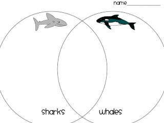 First Grade Fanatics: Whales and Sharks