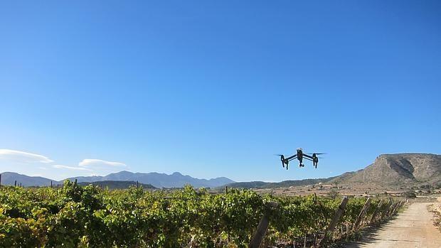 drones viñas