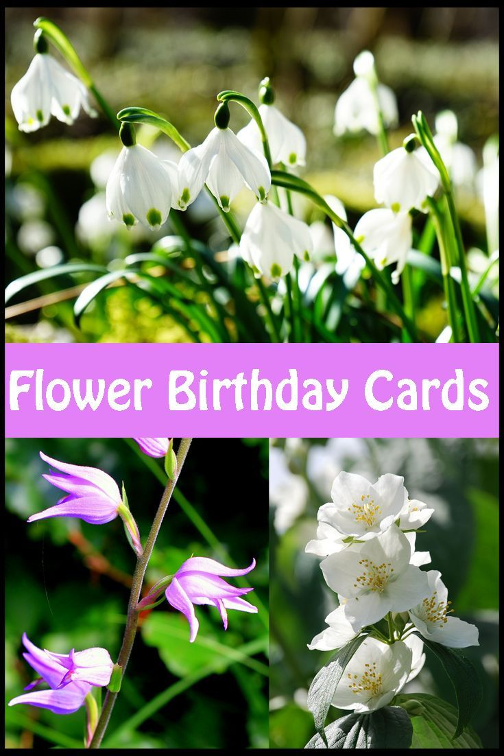 A great selection of floral birthday cards  that you'll love.
