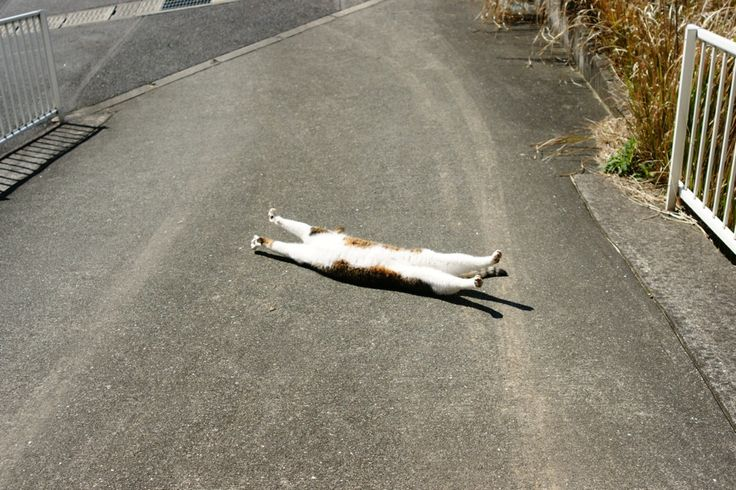 """""""I am NOT being dramatic!...I happen to be doing """"Upward Facing Cat.Lying Down, okay???"""""""