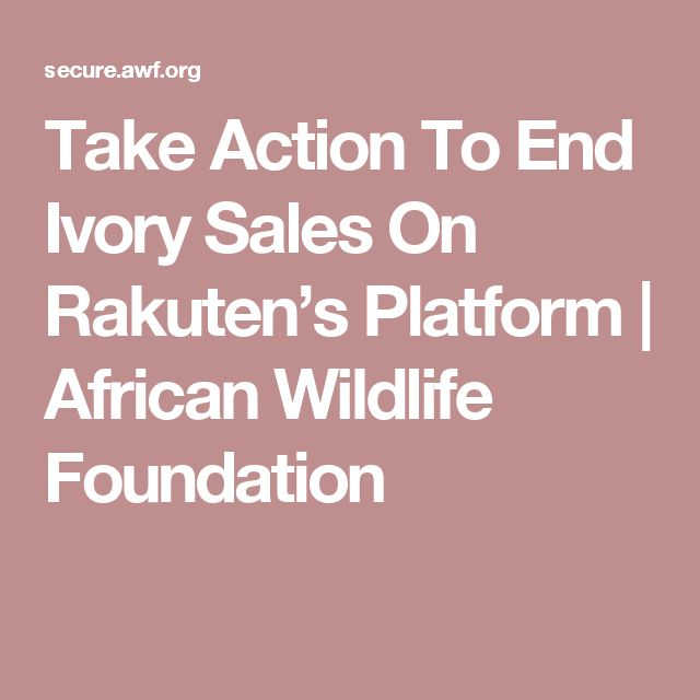 Take Action To End Ivory Sales On Rakuten's Platform | African Wildlife Foundation